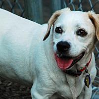 Adopt A Pet :: Bianca Hughes - Waldorf, MD