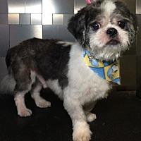Adopt A Pet :: Kurt Russell - McKinney, TX