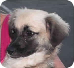 Spaniel (Unknown Type) Mix Dog for adoption in Reno, Nevada - Charizar