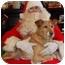 Photo 3 - Sheltie, Shetland Sheepdog/Border Collie Mix Dog for adoption in Anderson, Indiana - Jaci