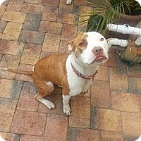 Adopt A Pet :: Lola - Lake Worth, FL