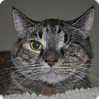 Domestic Shorthair Cat for adoption in La Canada Flintridge, California - Kyia