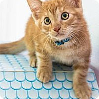 Adopt A Pet :: Bogus - Montreal, QC