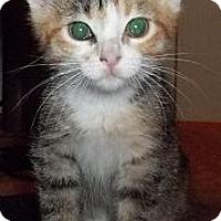 Adopt A Pet :: Matilda - Acme, PA