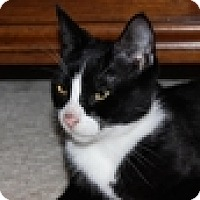 Adopt A Pet :: Crystal - Vancouver, BC