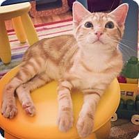 Adopt A Pet :: Tigger - Raleigh, NC