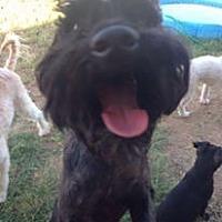 Adopt A Pet :: Maxwell - Maricopa, AZ