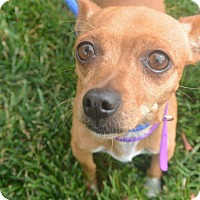 Adopt A Pet :: Milly - Meridian, ID