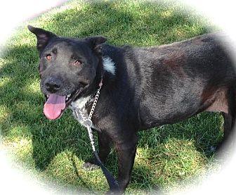 Labrador Retriever Mix Dog for adoption in Anaheim, California - Juliet