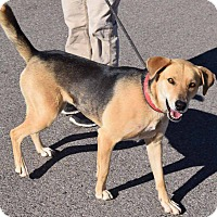 Adopt A Pet :: Sophie - Sierra Vista, AZ