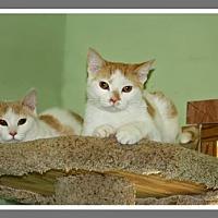 Adopt A Pet :: Thelma & Louise - Marion, KY
