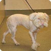 Adopt A Pet :: Arizona - Wildomar, CA