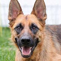 Adopt A Pet :: Bella - Wayland, MA