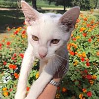 Adopt A Pet :: Willie - Smithtown, NY