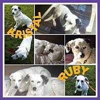 Adopt A Pet :: Kristal - Fort Collins, CO