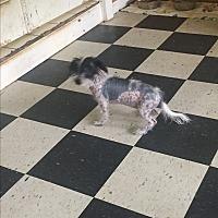 Adopt A Pet :: Fancy - Pt orange, FL