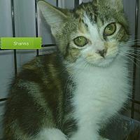 Adopt A Pet :: Shanna - Irwin, PA