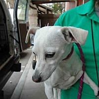 Adopt A Pet :: ADELINE - Upland, CA