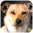 Photo 1 - Terrier (Unknown Type, Medium)/Shepherd (Unknown Type) Mix Dog for adoption in Vista, California - Suga