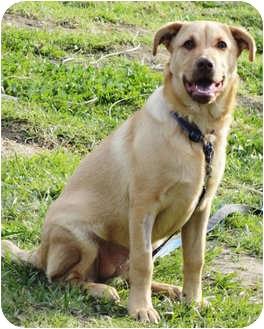 Labrador Retriever Mix Puppy for adoption in El Cajon, California - NALA