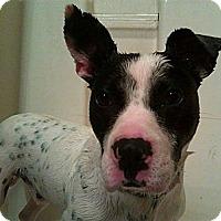 Adopt A Pet :: Smokey - Morristown, TN