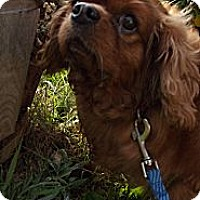 Adopt A Pet :: Molly - Fort Hunter, NY