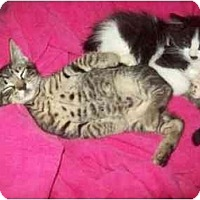 Adopt A Pet :: READY 8-1-10 - Little Neck, NY