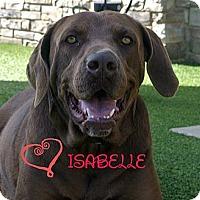 Adopt A Pet :: Isabelle - white settlment, TX