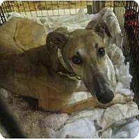 Adopt A Pet :: Gantner (Super C Gantner) - Chagrin Falls, OH