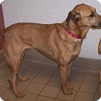 Adopt A Pet :: Sadie - Jackson, MI