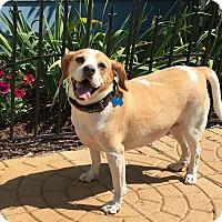 Adopt A Pet :: Cash - Raritan, NJ