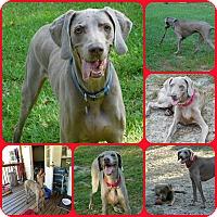 Adopt A Pet :: Bedford - Inverness, FL