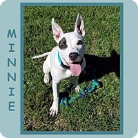 Adopt A Pet :: MINNIE - Dallas, NC