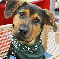 Adopt A Pet :: Hank  35 pounds - Sacramento, CA