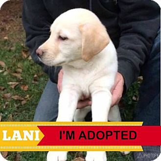 Labrador Retriever Mix Puppy for adoption in Regina, Saskatchewan - Lani