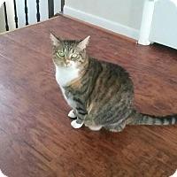 Adopt A Pet :: Autumn_Courtesy Post - Columbia, MD