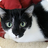Adopt A Pet :: Beautiful - Chicago, IL