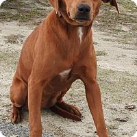 Adopt A Pet :: MaryAnn - Gainesville, FL