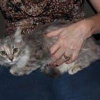 Adopt A Pet :: Sterling - Garland, TX