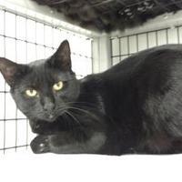 Adopt A Pet :: Kourtney - Decatur, IL