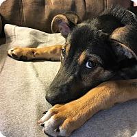 Adopt A Pet :: Simon - Nashville, TN