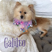 Adopt A Pet :: Galileo - Dallas, TX