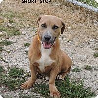 Adopt A Pet :: Short Stop - Washington, GA