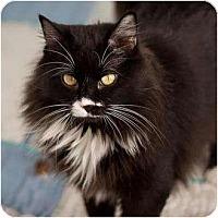 Adopt A Pet :: Mabel - Denver, CO