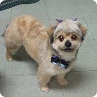 Adopt A Pet :: Fancy - Encinitas, CA