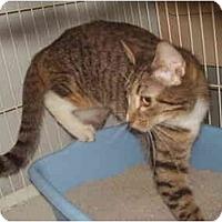 Adopt A Pet :: Delaney - Jacksonville, FL