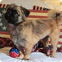 Adopt A Pet :: Diamond - Richmond, VA