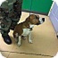 Adopt A Pet :: Jake-URGENT - Providence, RI