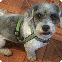 Adopt A Pet :: Solomon - geneva, FL