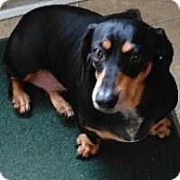 Adopt A Pet :: Addie - Georgetown, KY